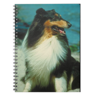Tri-Colored Collie Dog Notebook
