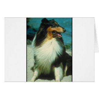 Tri-Colored Collie Rough Coat Greeting Card
