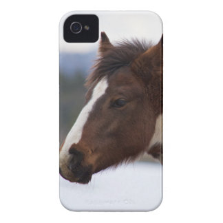 Tri-Colored Horse iPhone 4 Cover
