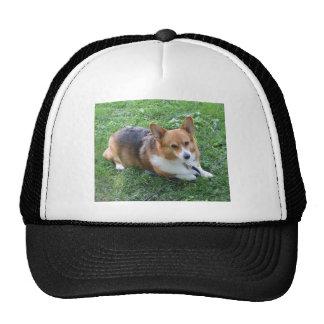 TRI-COLORED PEM IN GRASS HATS