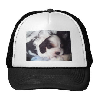 Tri perrito coloreado de cocker spaniel gorros bordados