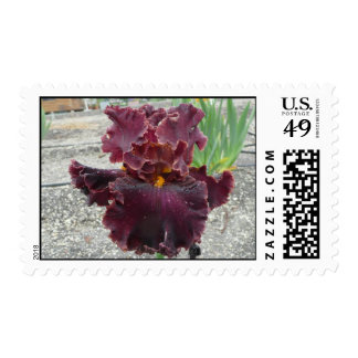 TRIAL BY FIRE Iris Stamp