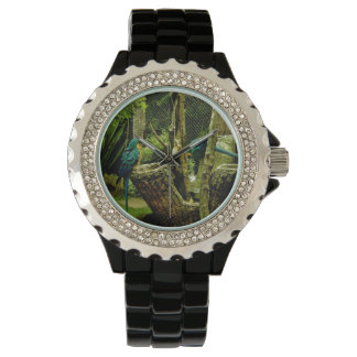 """Tribute: To Pacheco give the """"A me"""" (Rúa wants cac Wristwatches"""