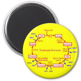 tricarboxylic acid cycle magnet