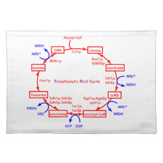 tricarboxylic acid cycle placemat