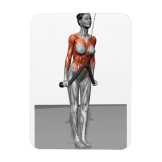 Triceps Push Downs Magnet