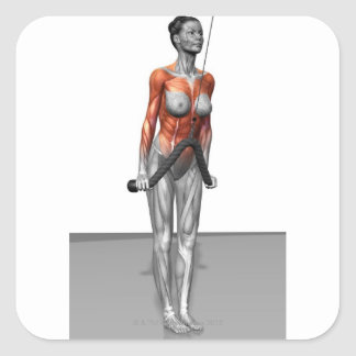 Triceps Push Downs Square Sticker