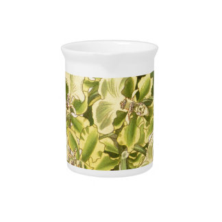 Trichocentrum bicallosum (as Oncidium bicallosum) Drink Pitchers