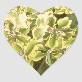 Trichocentrum bicallosum (as Oncidium bicallosum) Heart Sticker