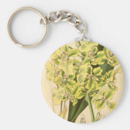 Trichocentrum bicallosum (as Oncidium bicallosum) Keychain