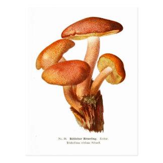 Tricholoma rutilans postcards