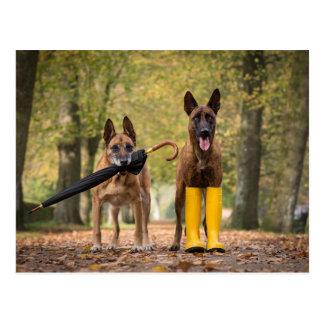 Trick dogs II Postcard