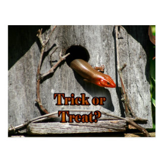 Trick or Treat? Large Lizard hanging out Birdhouse Postcard