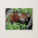 "Tricksy Red Panda Jigsaw Puzzle<br><div class=""desc"">Cute red panda puzzle.  May be more difficult because of repeat pattern!!</div>"
