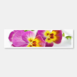 Tricolor   anniversary   flower   Pansy   cute   B
