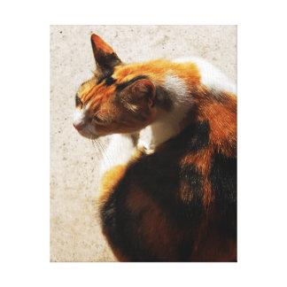 Tricolor Cat Canvas