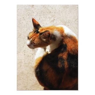 Tricolor Cat Invitation
