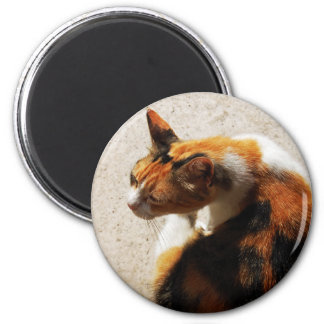 Tricolor Cat Magnet