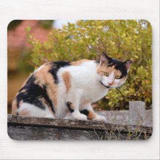 Tricolor cat mouse pad