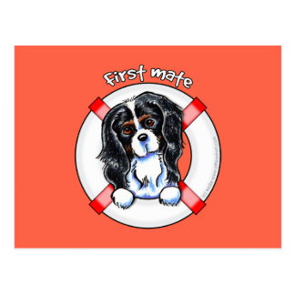 Tricolor Cavalier CKCS First Mate Postcard