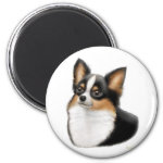 Tricolor Chihuahua Magnet