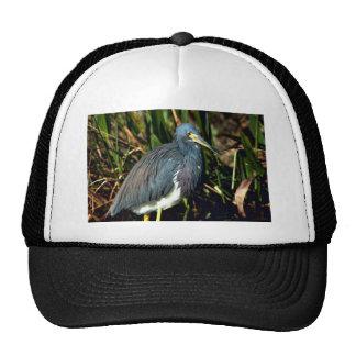 Tricolor Heron Hat