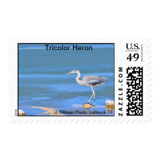Tricolor Heron Postage Stamp