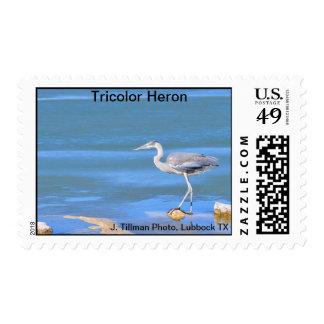 Tricolor Heron Postage Stamp