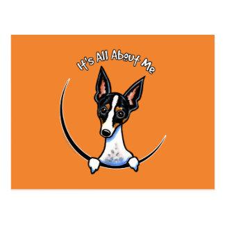 Tricolor Rat Terrier IAAM Postcard
