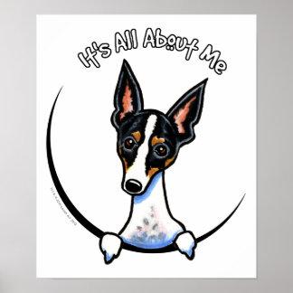 Tricolor Rat Terrier IAAM Poster