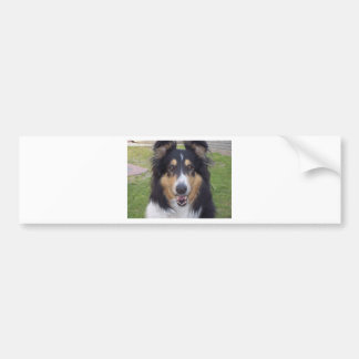 Tricolor rough collie bumper sticker