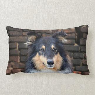 Tricolor Sheltie Lumbar Pillow