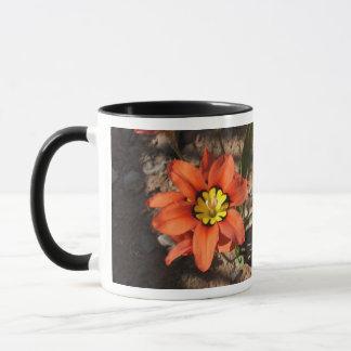 Tricolor Sparaxis flower Mug