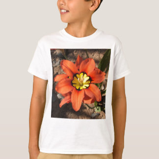 Tricolor Sparaxis flower T-Shirt