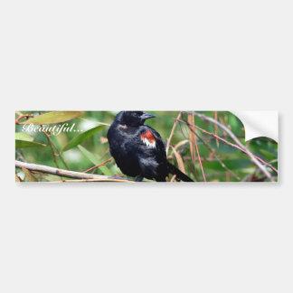 Tricolored blackbird bumper stickers