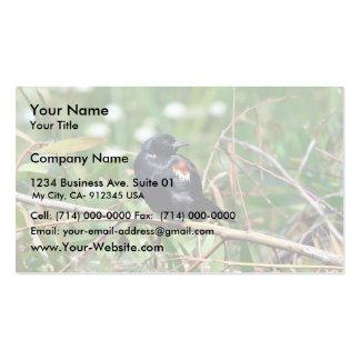 Tricolored blackbird business card