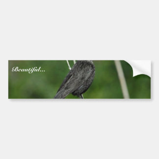 Tricolored Blackbird (female) Car Bumper Sticker