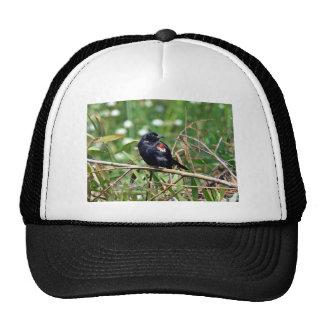 Tricolored blackbird hats