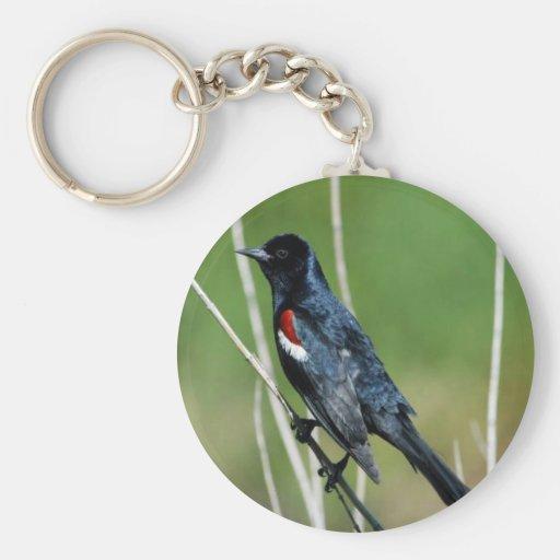 Tricolored Blackbird (male) Basic Round Button Keychain
