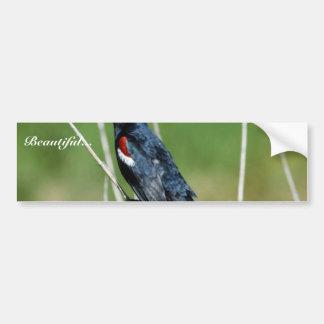 Tricolored Blackbird (male) Car Bumper Sticker