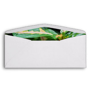 Tricolored Caricature Plant Envelope