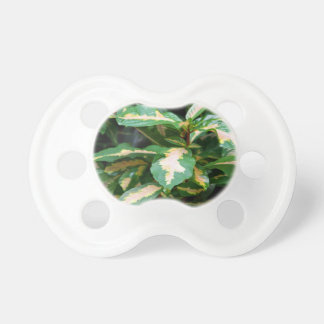 Tricolored Caricature Plant Pacifier