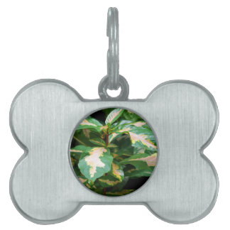 Tricolored Caricature Plant Pet Tag