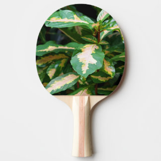 Tricolored Caricature Plant Ping Pong Paddle