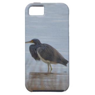 Tricolored Heron Bird Nature iPhone 5/5S Case