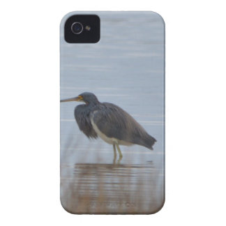 Tricolored Heron Bird Nature iPhone 4 Cover