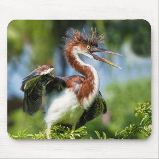 Tricolored Heron Bird with Bad Hair Mouse Pad