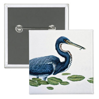 Tricolored heron pinback buttons
