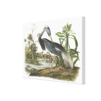 Tricolored Heron by Audubon Canvas Print