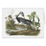 Tricolored Heron by Audubon Greeting Card